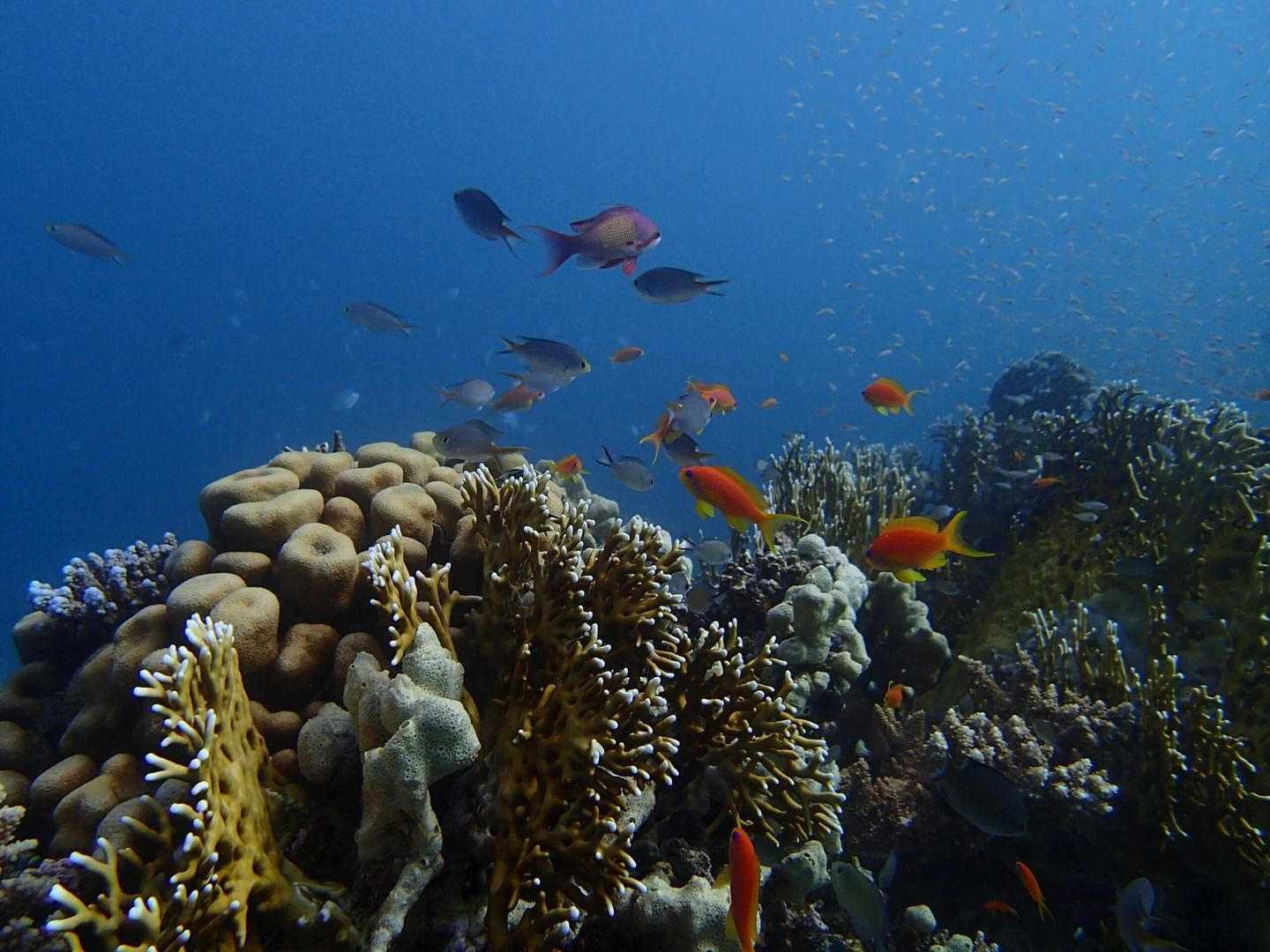Reef Diving in Egypt