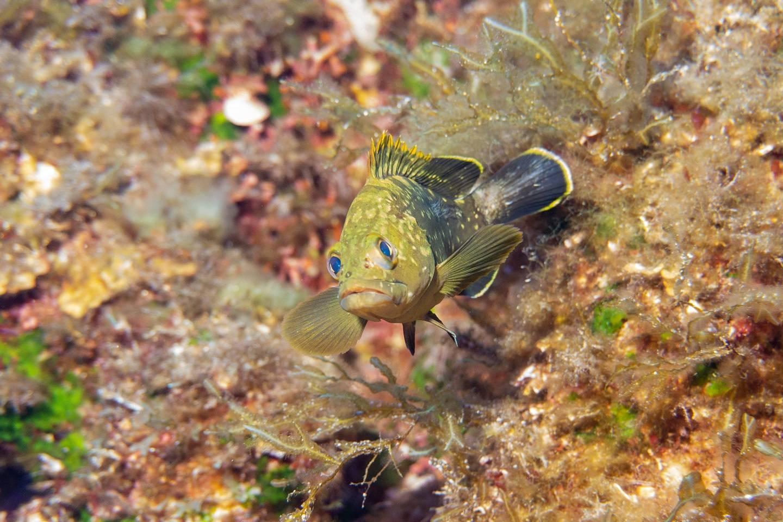 Grouper Diving Malta