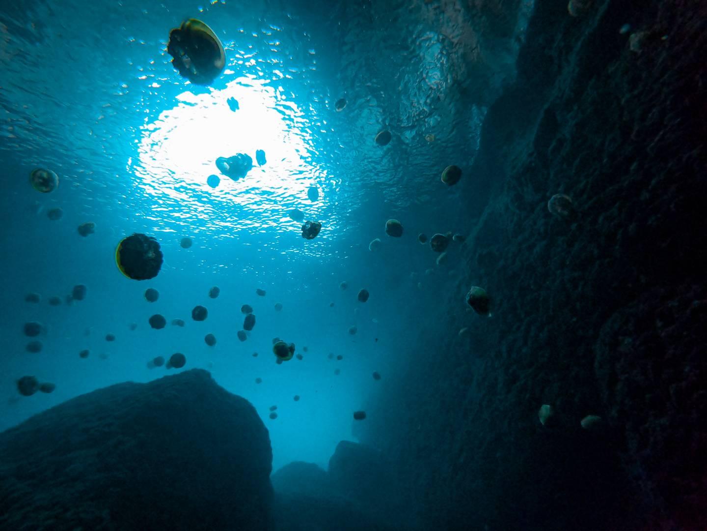Gozo Jellyfish