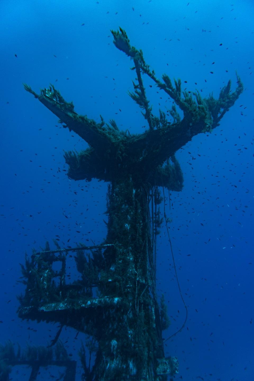 P29 Malta Mast